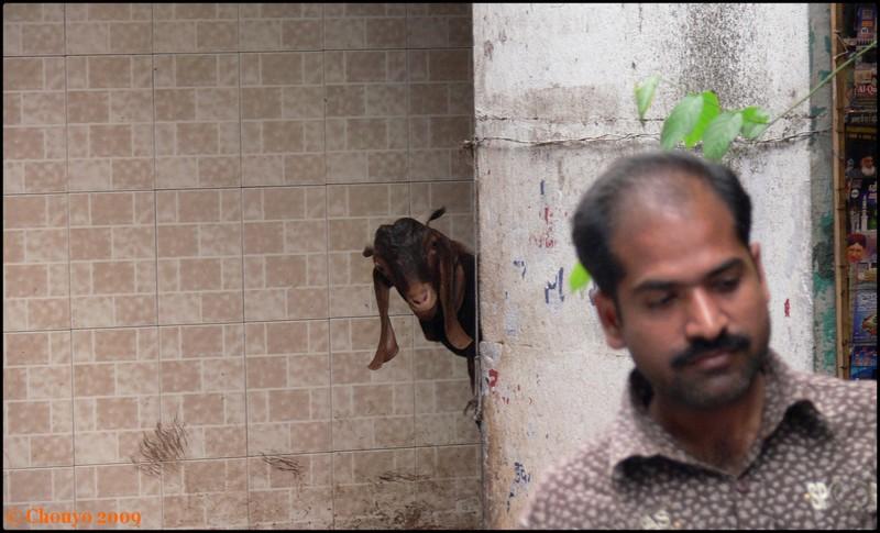Chèvre Bombay