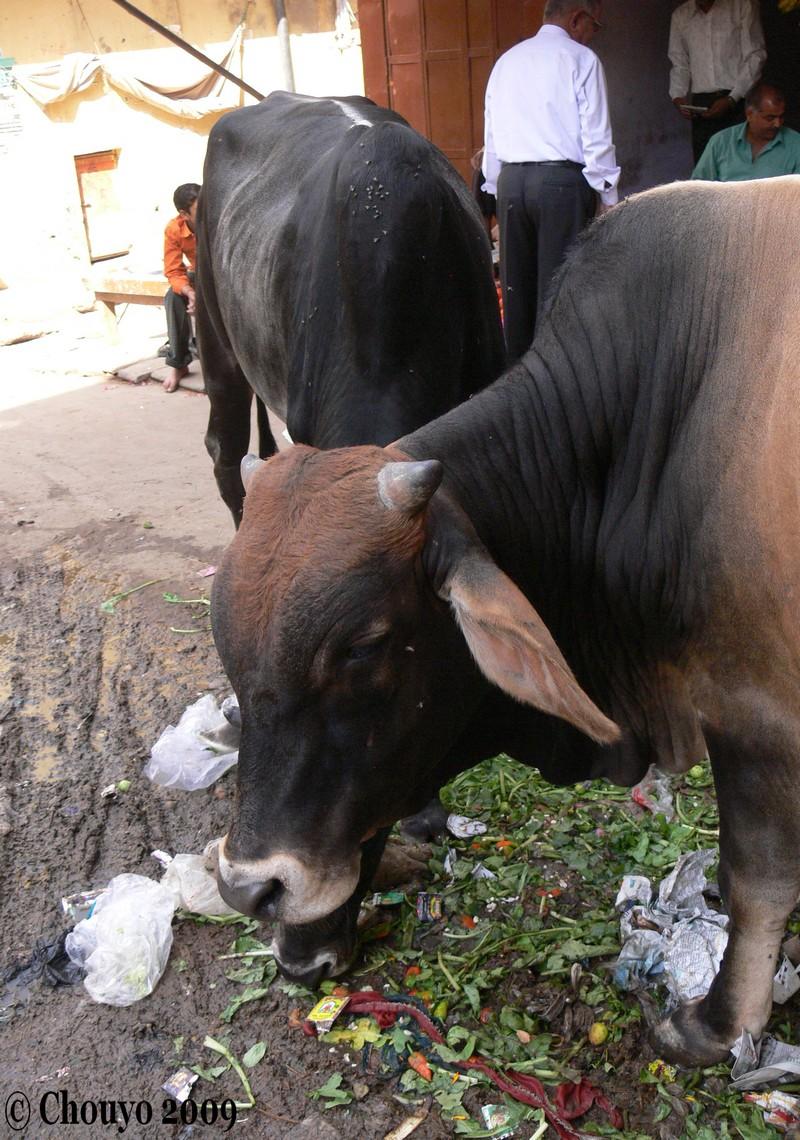 Shekhawati 91