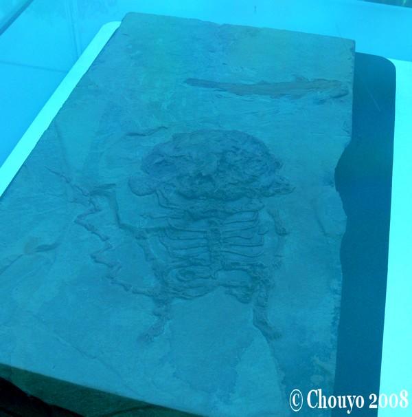 Fossile Pikachu 2
