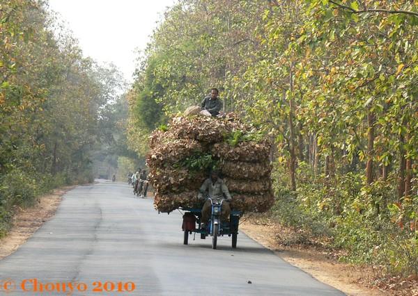 Bishnupur Feuilles