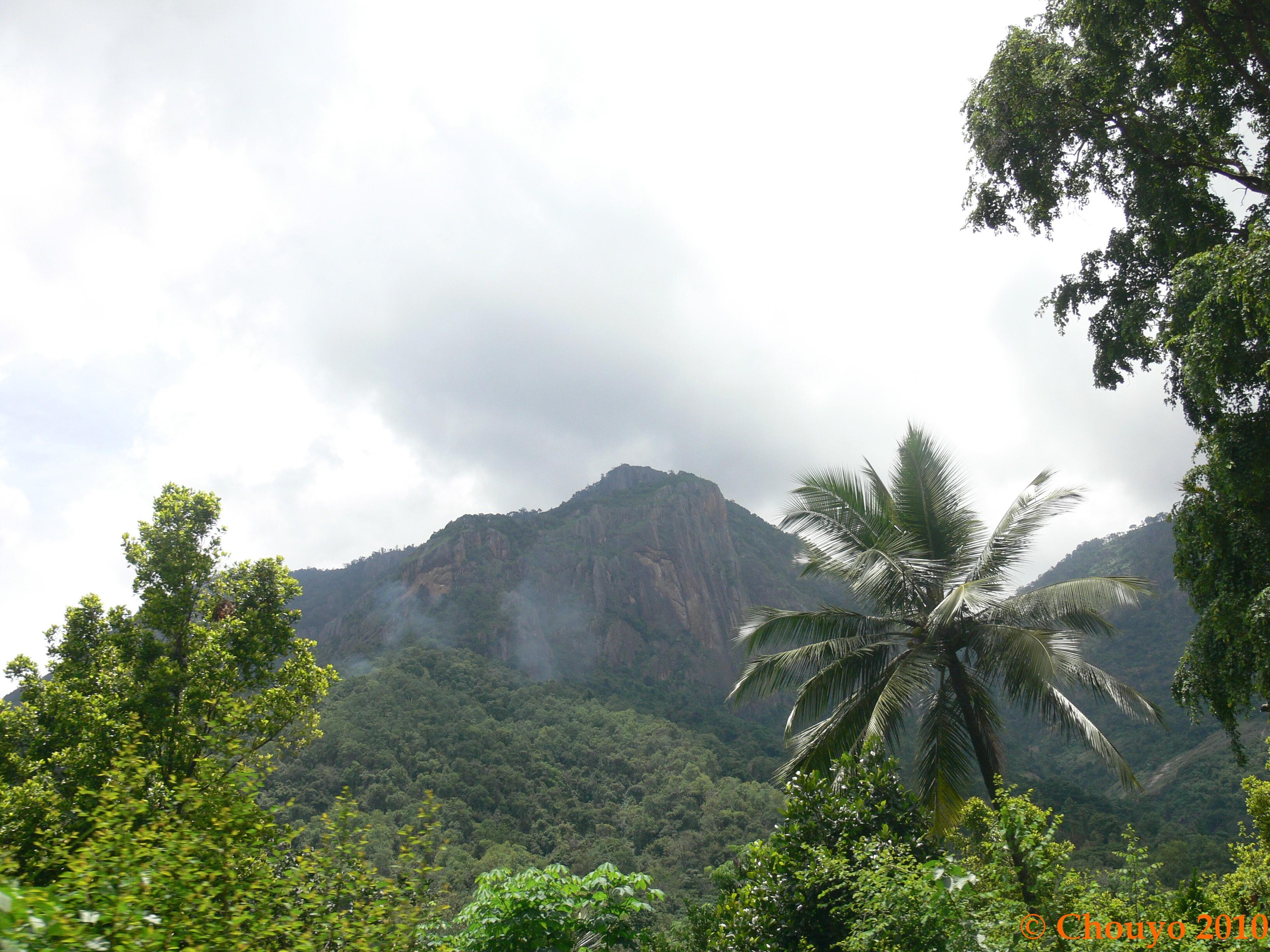 Nilgiri Hills 2