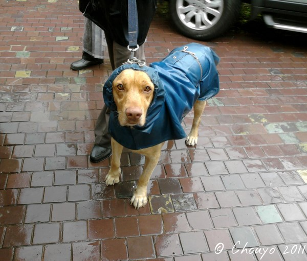 Bombay Monsoon Dog