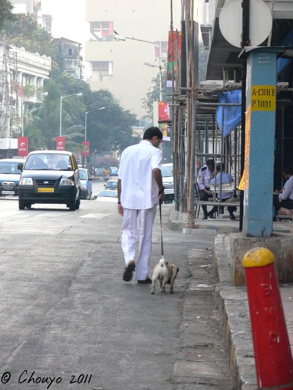Mumbai Dogsitter