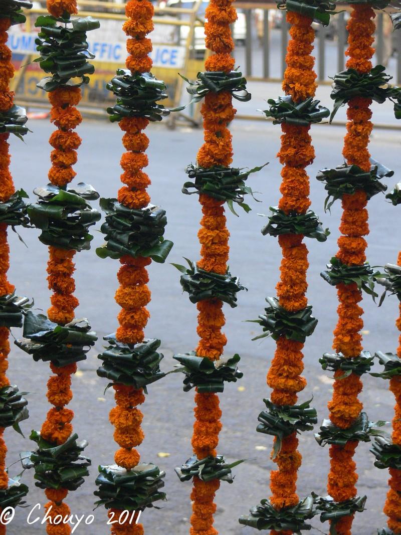 Diwali Fleurs 5