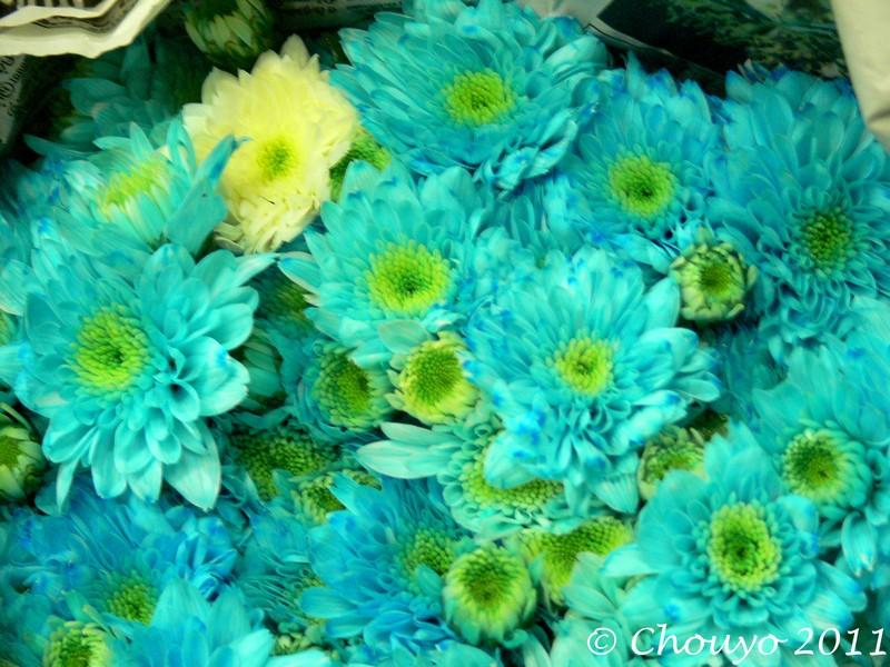 Marché aux Fleurs 16 blog