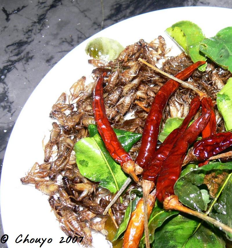 Laos Vientiane Criquets