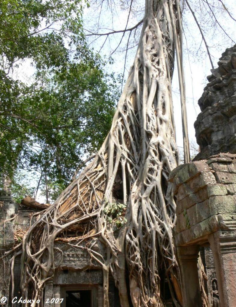 Cambodge Angkor 7