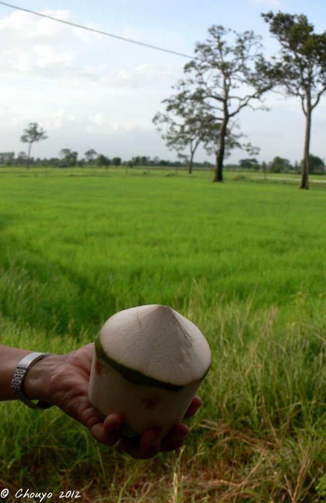 Thaïlande Noix de coco 1