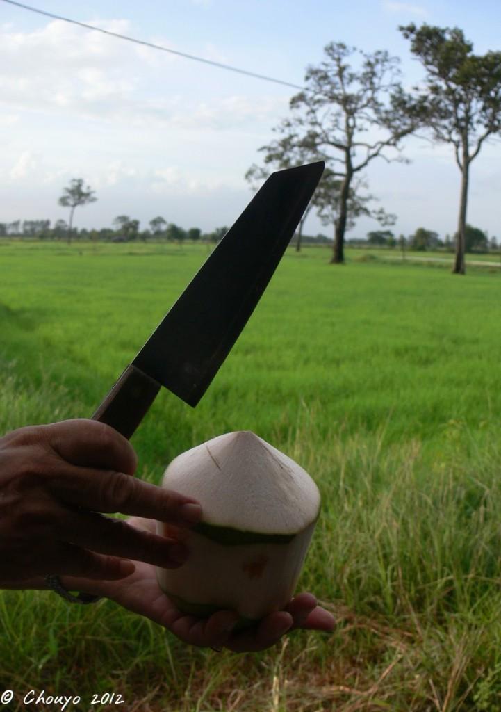 Thaïlande Noix de coco 3