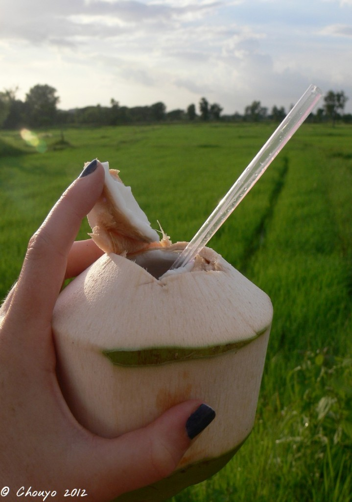 Thaïlande Noix de coco