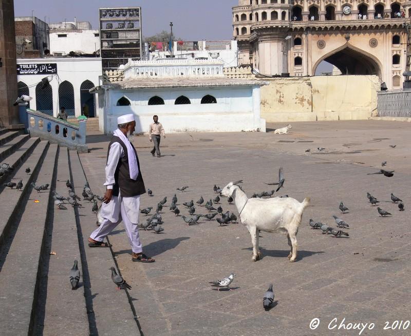 Hyderabad Chèvre