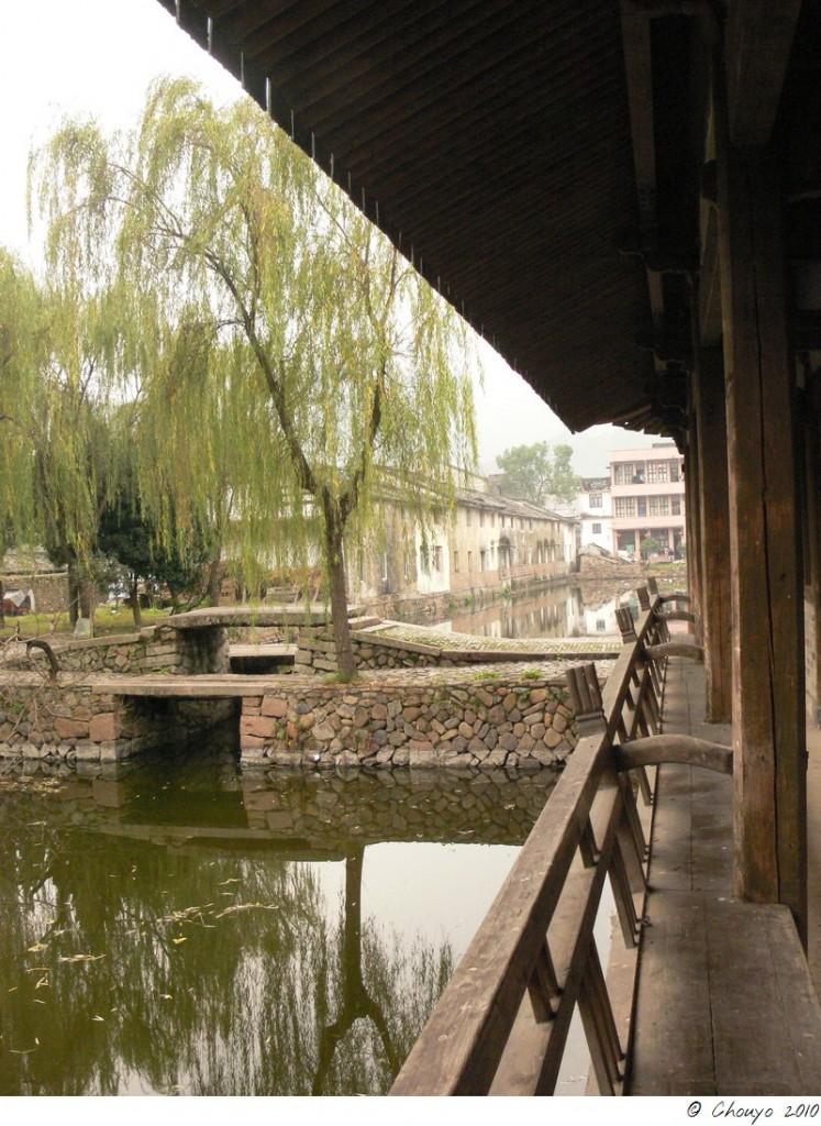 Wenzhou 5